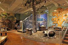 Coast to Cactus exhibit, San Diego Natural History Museum | Blue Rhino Studio
