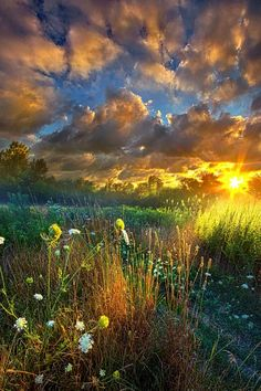 Sunset on a field of wildflowers.
