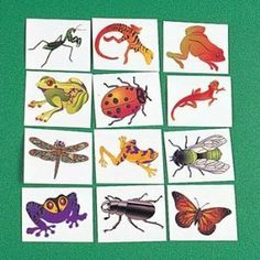 72 ct - Insect And Reptile Tattoos by Novelty Toys. $6.95. 72 assorted reptile and insect temporary tattoos. Insect And reptile Tattoos