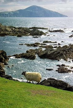 Achill Island, Ireland. Green&Blue are the most perfect combo...and a sheep walking!