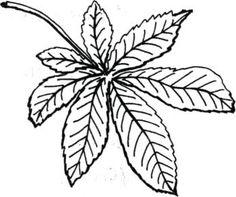осенние листья раскраска | Осенние листья, Искусство при ...