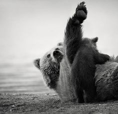 Patience . . . Adorable Photos of Bear Cubs in Russia's Wild East | Bored Panda