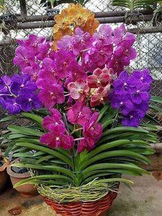 Flowers my Inspiration Orchids Garden, Cymbidium Orchids, Orchid Plants, Exotic Plants, Unusual Flowers, Amazing Flowers, Pretty Flowers, Orquideas Cymbidium, Orchid Flower Arrangements