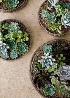 Living Green: Succulent Home Decor