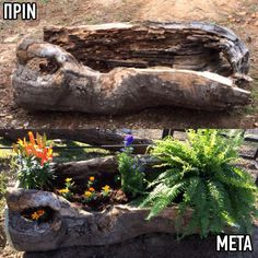 Hollow tree stump ideas planters 17 Ideas for 2019 Driftwood Planters, Diy Planters, Garden Planters, Planting Succulents, Garden Art, Garden Design, Planter Ideas, Succulent Landscaping, Garden Landscaping