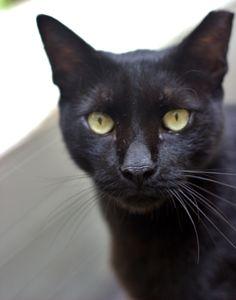 A black friendly cat in Loveat Cafe,Tel Aviv