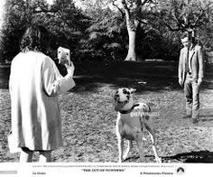 Jack Lemmon ,Sandy Dennis and Great Dane  dog  in  The Out of Towners 1970