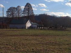 """"""" Horse Farm"""" in the Appalachian Hills! Fresh Air ! Peace& Serenity"""
