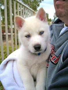 Bianco...So cute!