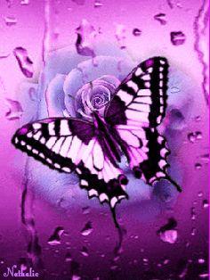 Purple Rose & Butterfly