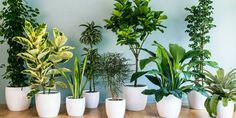 House Plants & Tips on Care Chic House Plants & Tips on Care I LOVE houseplants, especially if they don't interest the cats.Chic House Plants & Tips on Care I LOVE houseplants, especially if they don't interest the cats. Living Room Plants, House Plants Decor, Bedroom Plants, Living Spaces, Small Living, Indoor Green Plants, Indoor Plants Low Light, Indoor House Plants, Potted Plants