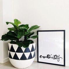 danielle oakey interiors: Fiddle Leaf Fig Tree Love