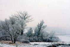 Frosty Morn Landscape Print Winter Trees KW23 by DeMintGallery