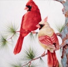 Pair of Cardinals