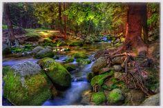 Stream. Leśny potok.