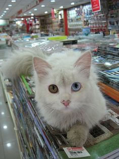 Every self-respecting bookstore should have at least one cat.