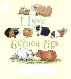 Guinea pigs! :)