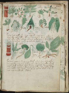 manuscrito216.jpg (1133×1536)