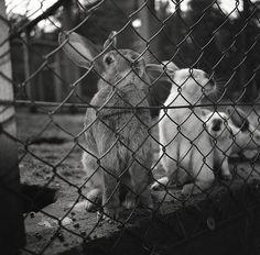 Rabbits in black & white
