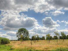 Parc Urbain à Savigny-le-Temple - Plaine sauvage