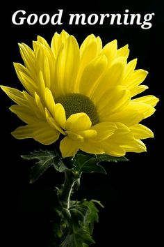 Pin by nk on good morning pinterest yellow flower portrait by chris aquino daisy because he loves you loves you always mightylinksfo
