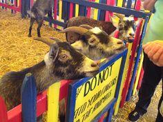 #goats @ the big E