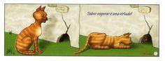 Provérbio com gato: SABER ESPERAR É UMA VIRTUDE!