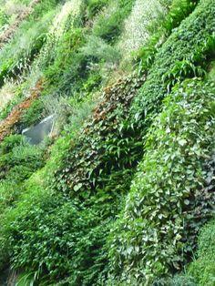 Inauguration de l'oasis d'Aboukir créée par Patrick Blanc (vertical garden)…