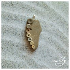 Crinoid Fossil Jewelry Pendant Small Crinoids by SeaLilyRelics