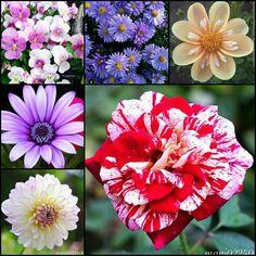 Clases de flores colores