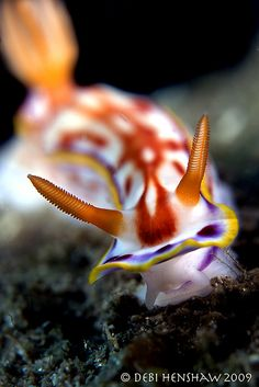 Never heard of these creatures. They are called nudibranch. On this site you find many spectacular species!
