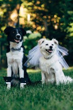 Couple Has The Best Reaction After Stray Dog Crashes Their Wedding - After a stray dog crashed their wedding this couple had the best reaction ever