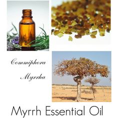 Myrrh Essential Oil, by forever-changing on Polyvore featuring beauty