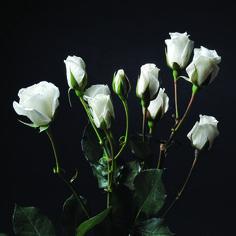 Princess #RosesColombia #RedilRoses #ColombianFlowers #Roses #BlomFlores #Regalos