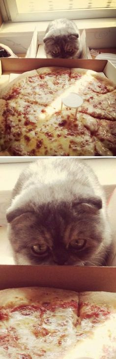 I am going to attack that white thing on the pizza in three... two...