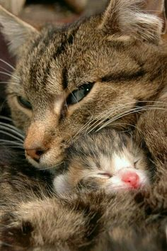 Safe and secure with Mom.