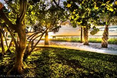 Gilchrist Park, Punta Gorda Sunset among the Sea Grapes #LoveFL