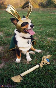 Loki, Asgard Dog of Mischief - The Cutest Dogs Dressed as Superheroes
