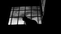 A blog about cats, writings, photography, writings and catography.