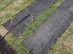芝生化実験 持続可能な芝生の駐車場へ