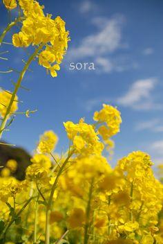 浜離宮の菜の花畑で・・・@東京  ウーマンエキサイト みんなの投稿