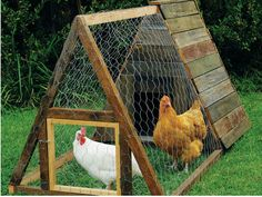 The aim of a coop is to protect chooks from cold winds in winter and extreme heat in summer plus supply timber perches for roosting and boxes for egg laying. Position the coop under a tree for shade and cover the floor with straw, timber shavings or sawdust, especially underneath perches. TIP Birds that roam are less likely to develop problems induced by boredom, such as egg eating and pecking.