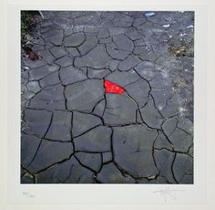 Andy Goldsworthy, ohne Titel, Fotograhttp://www.artfacts.net/en/exhibition/focus-photographie-189855/artwork/ohne-titel-17602.htmlfie, 26 x 26 cm,