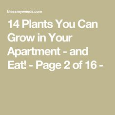 14 Plants You Can Grow in Your Apartment - and Eat! - Page 2 of 16 -