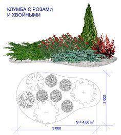 клумбы с розами и лилиями: 12 тыс изображений найдено в Яндекс.Картинках