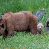 Premier Clark: Protect grizzly bears by banning the trophy hunt | What is it with all these damn trophy hunts for killing. What sort of message does this send? In my opinion, the wrong one! Click for details and please SIGN and share petition. Thanks.