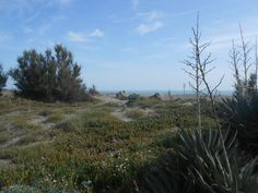 La Riserva Naturale del litorale romano presso la foce del Tredenari.