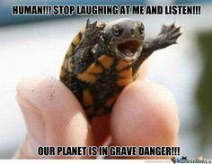 Call The Ninja Turtles