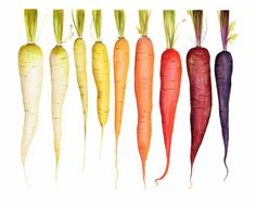 Archival quality print of my original illustration a rainbow of beautiful carrots spanning from white to deep purple. This art print would work