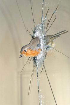 Polly Morgan #taxidermy...this is taxidermy but could be recreated using a realistically fake bird, waterproofed so half is outside the window and kept up with magnets and the cracks would be one of those broken glass decals.